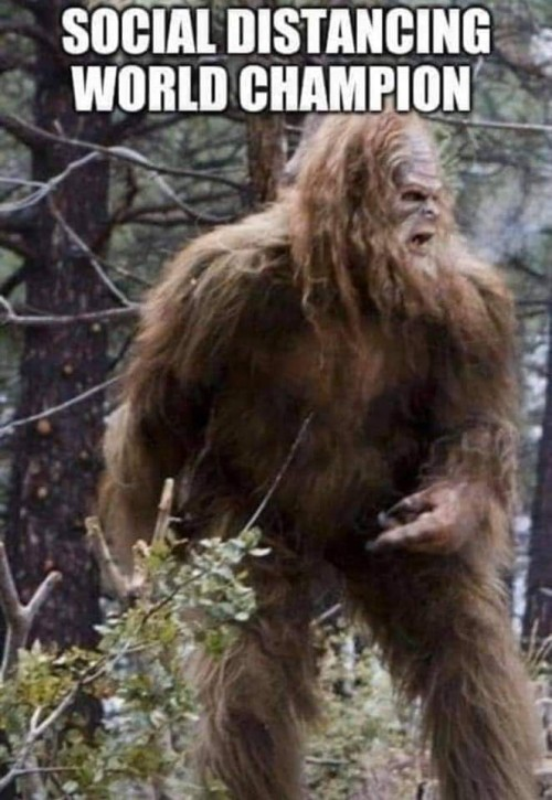 Bigfoot aka Sasquatch