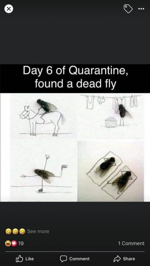 On-the-6th-day-of-Quarantine-True-Love-Found-a-Fly.jpg