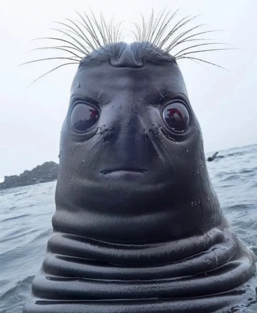 Seal-Face-Flipped.png