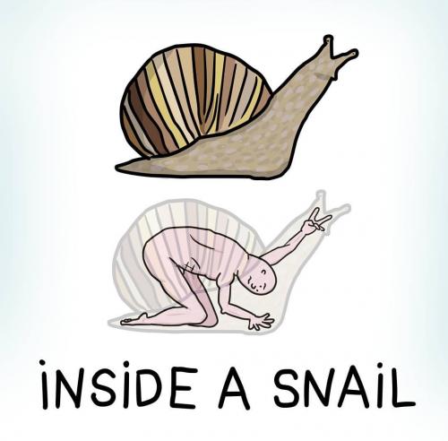 Shnail-Snail.png